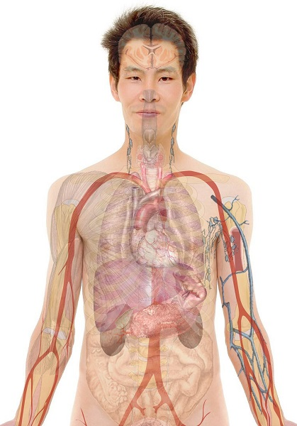 Čišćenje jetre